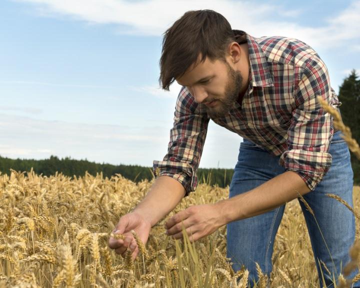 Új lendületet vehet a generációváltás az agráriumban