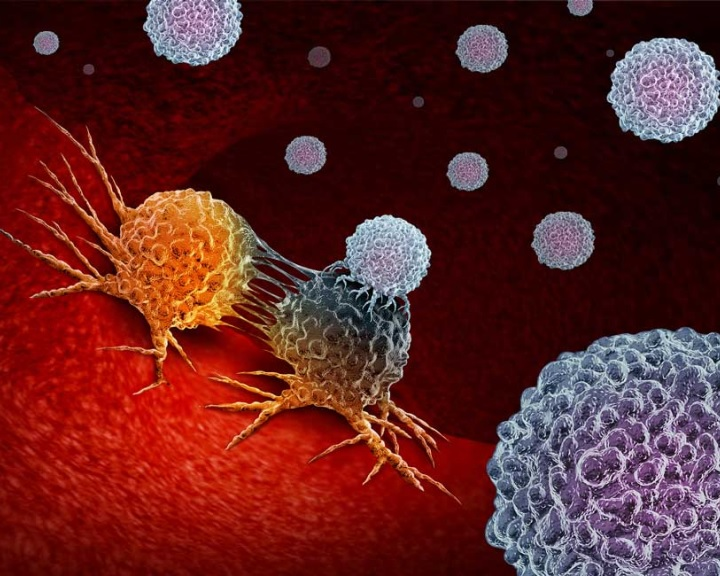 Új immunológiai felfedezés lehet az alapja egy új rákterápiának