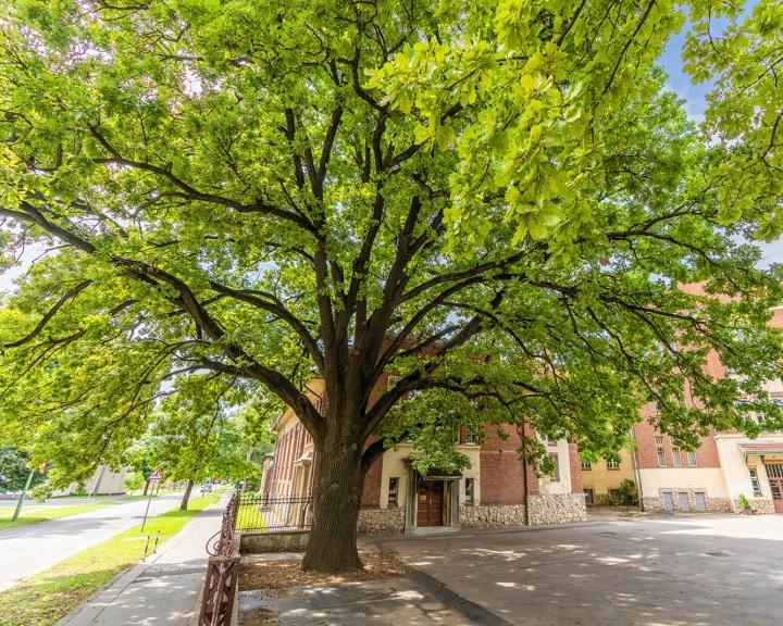 Lesz-e a magyar versenyző ötödszörre is az Európai Év Fája?