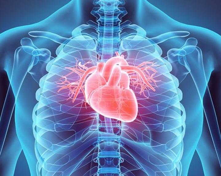 Először ültettek be laborban növesztett szívizmot emberbe