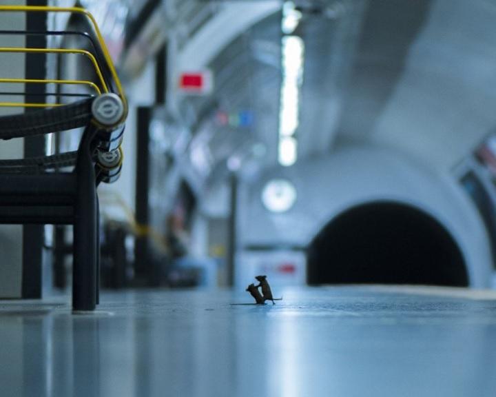 Egy metróállomáson készült a világ legjobb természetfotója