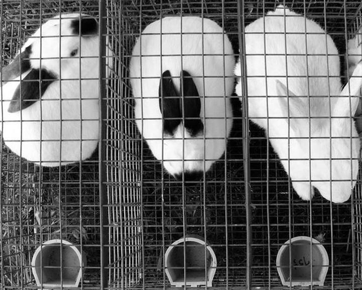 Az NVB elfogadta a ketreces állattartás beszüntetéséért gyűjtött aláírások ellenőrzéséről szóló jelentést