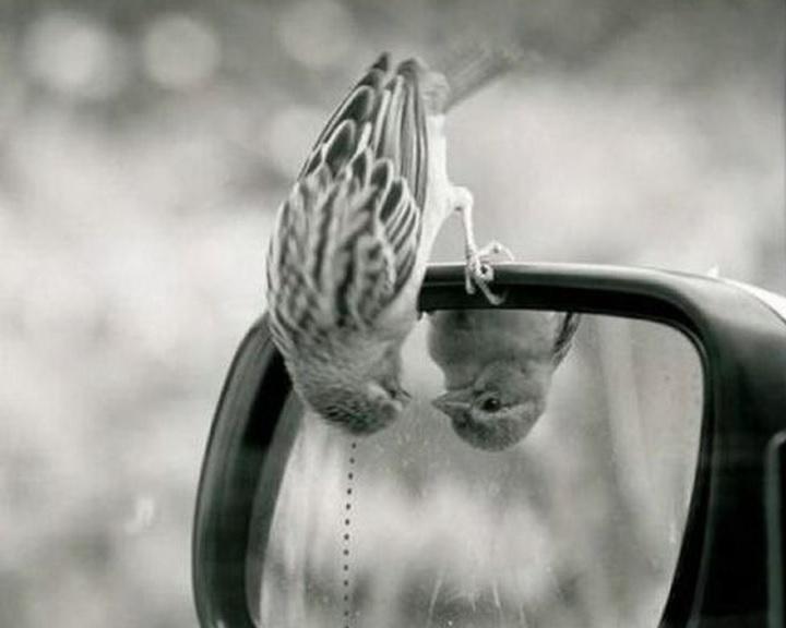 Megelőzhetők a költési időszakban megzavarodó madarak sérülései