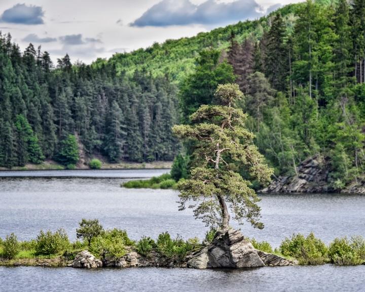 Nyolcadik helyen végzett a Kaposvári szabadságfa az Európai Év Fája versenyben