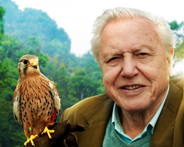 A természetfilmek hatására az emberek érdeklődőbbek lesznek a bemutatott fajok iránt