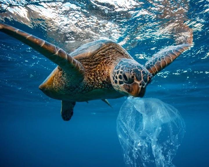 Az állatok által lenyelt műanyagok méretét becsülték meg kutatók