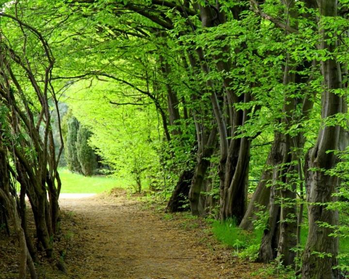 Az Erdő álma címmel hirdetett szépirodalmi pályázatot az idén a debreceni Nagyerdőért egyesület