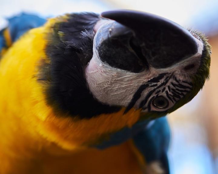 A Pécsi Állatkert május 9-én, szombaton nyitja meg kapuit