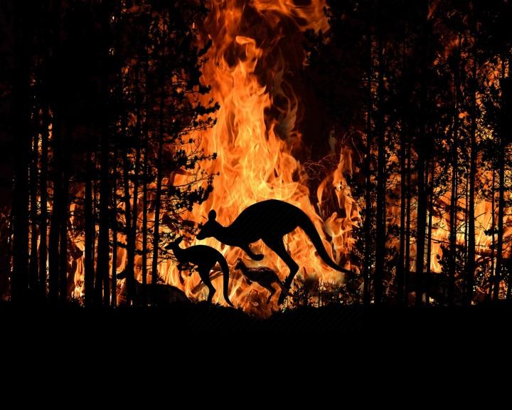 Az őserdők irtása súlyosbította az ausztrál bozóttüzek hatását