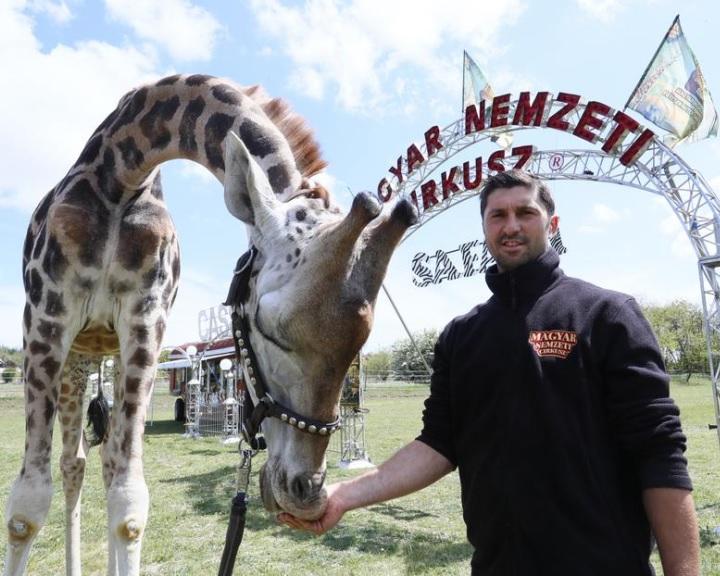 Nyit a Magyar Nemzeti Cirkusz Safari Parkja Szadán