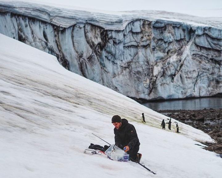 Az űrből térképezték fel az antarktiszi algavirágzást