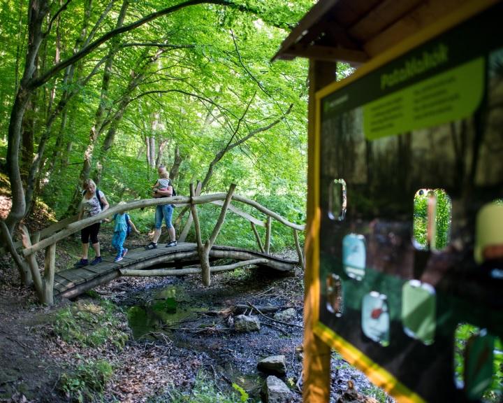 Az erdő rejtett kincseit bemutató tanösvény nyílt a Nyugat-Mecsekben