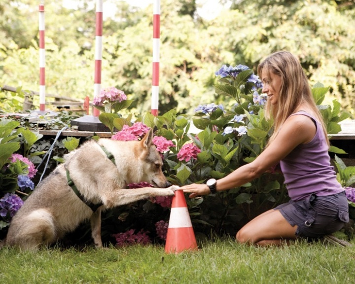 A kutyák tudatában vannak cselekvéseiknek egy új kutatás szerint