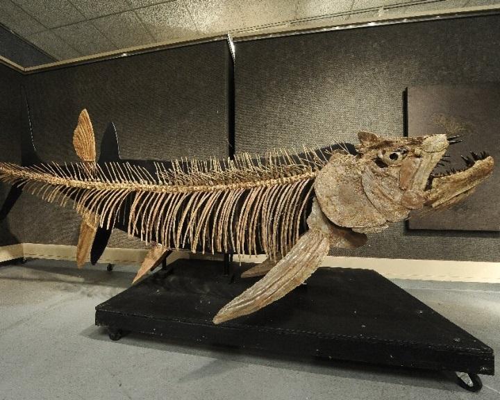 Hetvenmillió éves óriáshal kövületét fedezték fel Argentínában