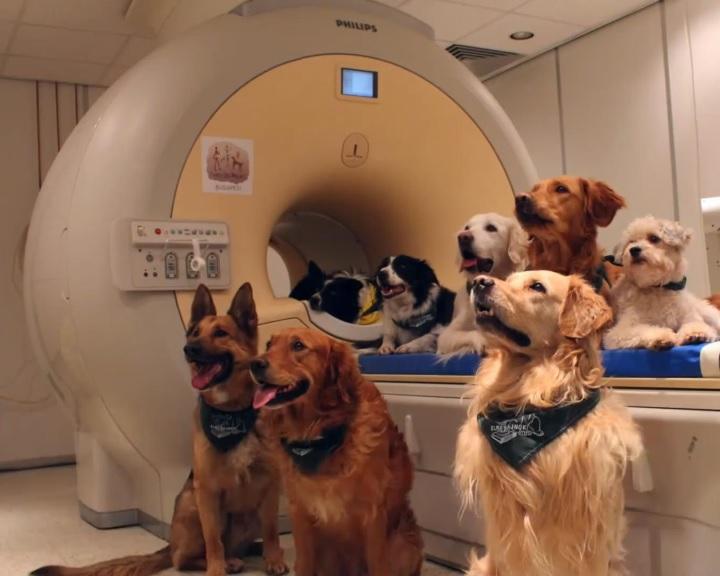 A kutyák agya az emberekéhez hasonlóan dolgozza fel a beszédet
