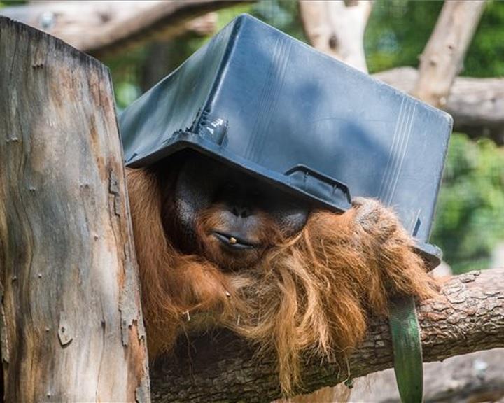 Vasárnap ünnepli fennállásának 154. évfordulóját a fővárosi állatkert
