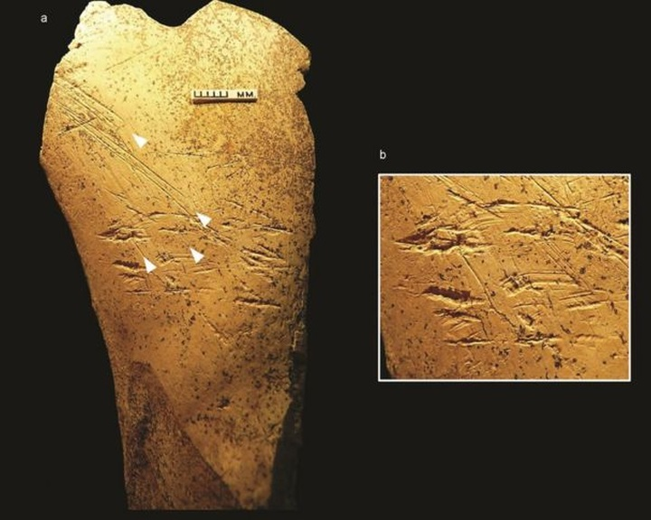 Európa legkorábbi ismert csonteszközeit azonosították brit régészek