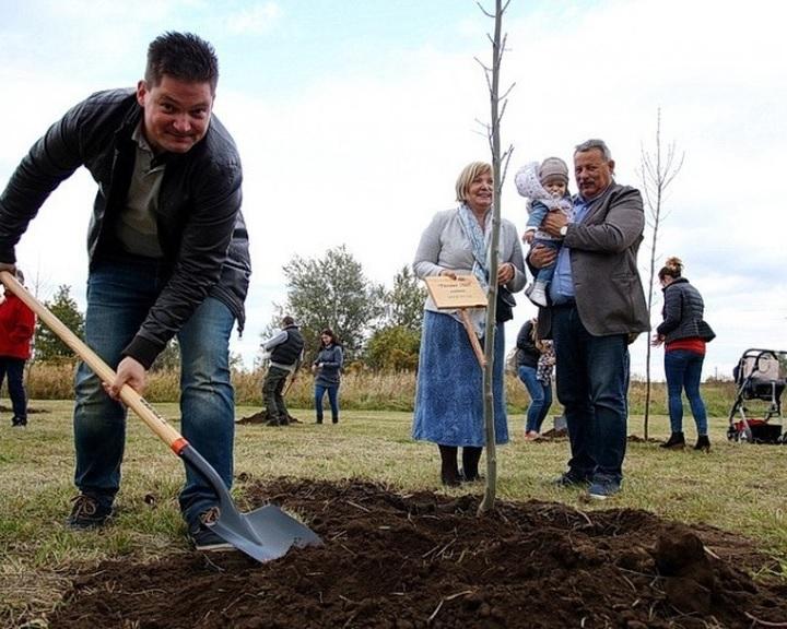 Együttműködik az Agrárminisztérium és az ITM mintegy 650 hektár új erdő létrehozásában