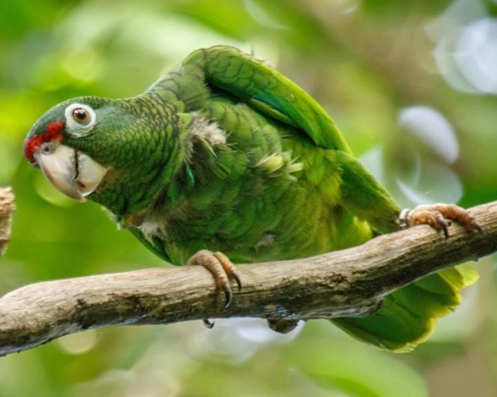 Legalább 28 fajt mentettek meg a kihalástól az elmúlt évtizedekben
