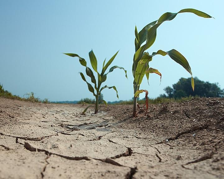 NAK: a szárazság nehezíti az őszi vetést