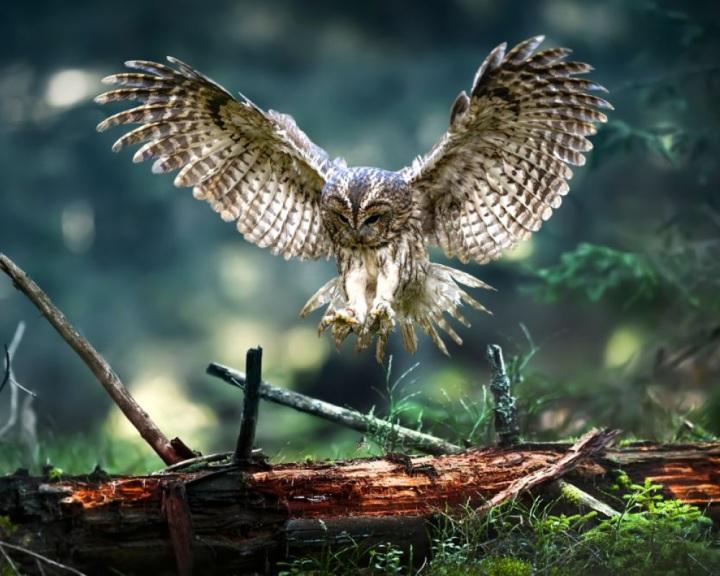 Madarászok várják a madárbarátokat a hétvégén az Európai Madármegfigyelő Napokon