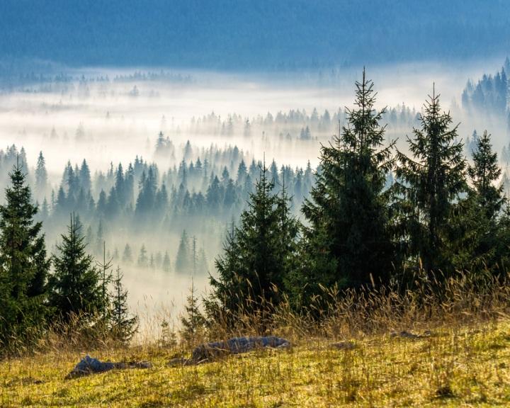 Fenntartható erdőgazdálkodásról fogadott el állásfoglalást az EP