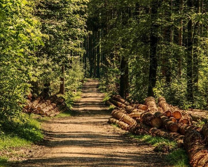 20 ezer hektárral nőtt az ország fával borított területe