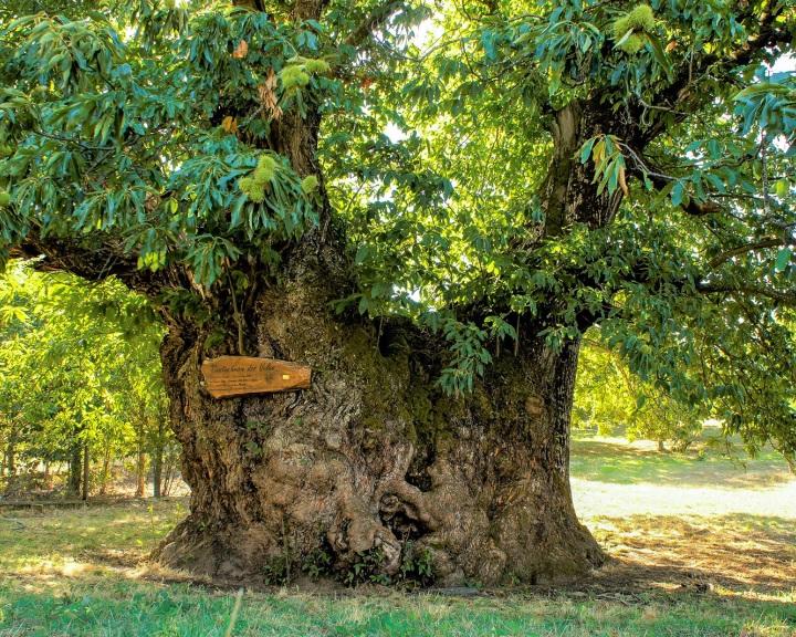 Elindult a 2021-es Év fáját kiválasztó virtuális szavazás