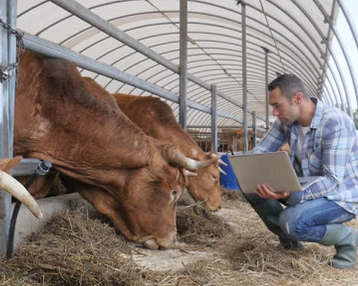 AM: megnyílt a legkisebb gazdálkodókat segítő vidékfejlesztési pályázat