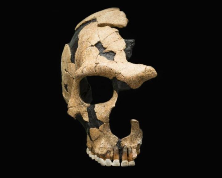 Faji háborúkban győztük le a neandervölgyieket