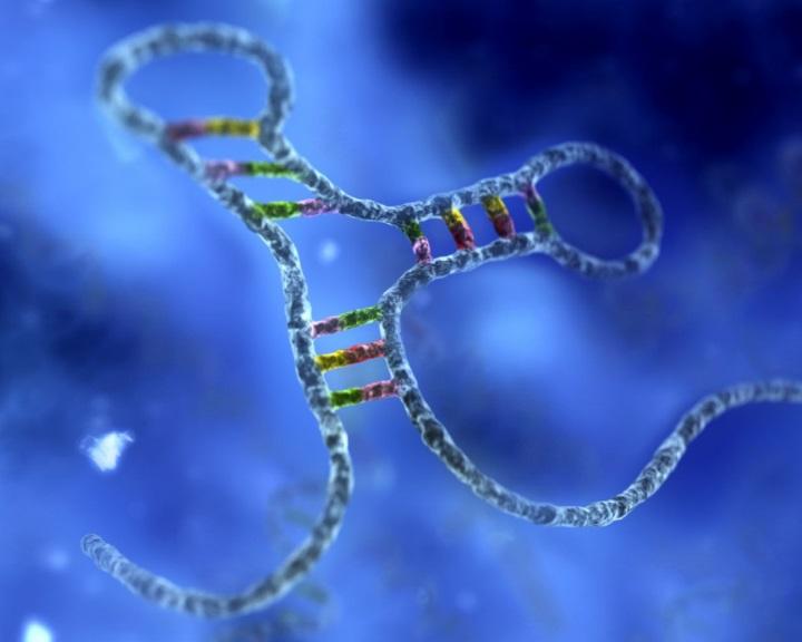 Szimuláció segítségével bizonyították a kromoszómák keletkezésének elméletét