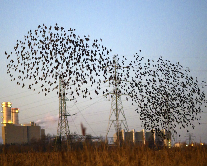 Nemzetközi programmal védik a madarakat a nagyfeszültségű távvezetékek által okozott balesetektől