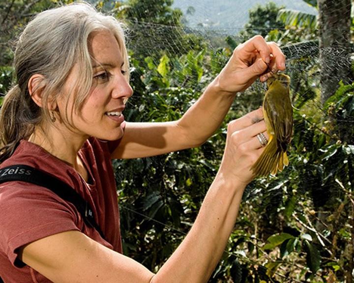 Az ózonszennyezés csökkentése mintegy 1,5 millió madár pusztulását is megakadályozta 40 év alatt
