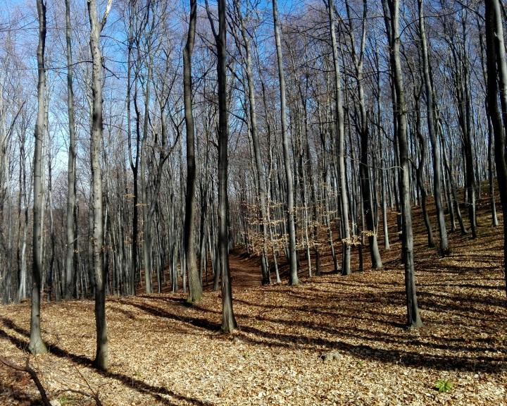Erdőlátogatási korlátozások a Mecsekben