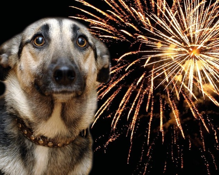 Szilveszterkor is vittek be elkóborolt kutyákat a Mol töltőállomásaira azonosítani