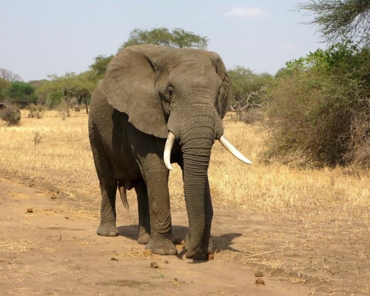 Először számoltak meg elefántokat a világűrből