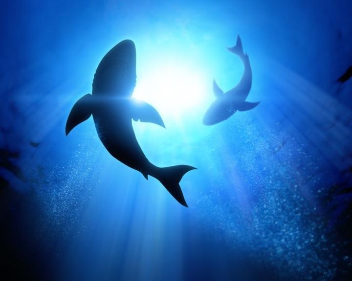 Nagyon kevés cápatámadás történt 2020-ban, de a korábbinál több volt a halálos kimenetelű