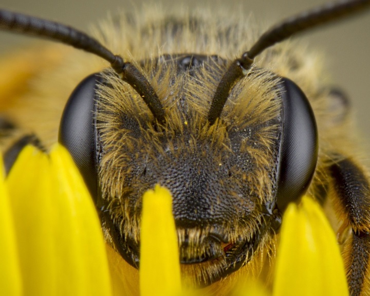 MME - Méhecske hotelekkel védhetjük a beporzó rovarokat