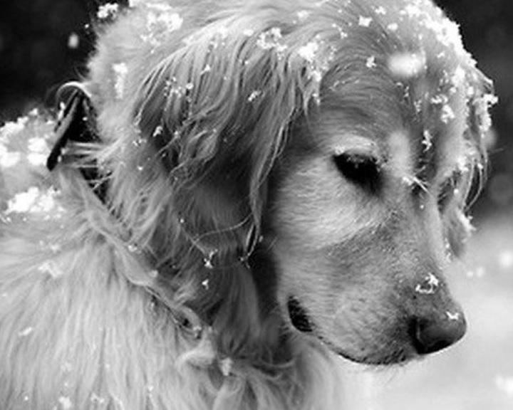 Hideg idő - Az állatokra is fokozottan kell figyelni