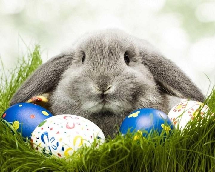Húsvéti tojásfestő pályázatot hirdet a pécsi Zsolnay Örökségkezelő