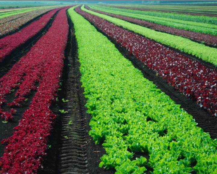 Jelentősen bővül az ökológiai gazdálkodás területe Magyarországon