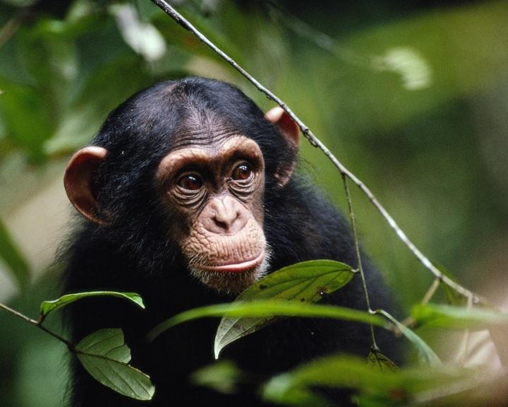 Sok állatfaj ösztöneire hallgatva gyakorolja a biztonságos távolságtartást