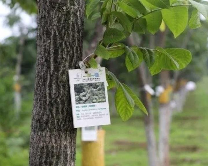 Több mint 200 millió fát ültettek Pekingben az elmúlt negyven évben