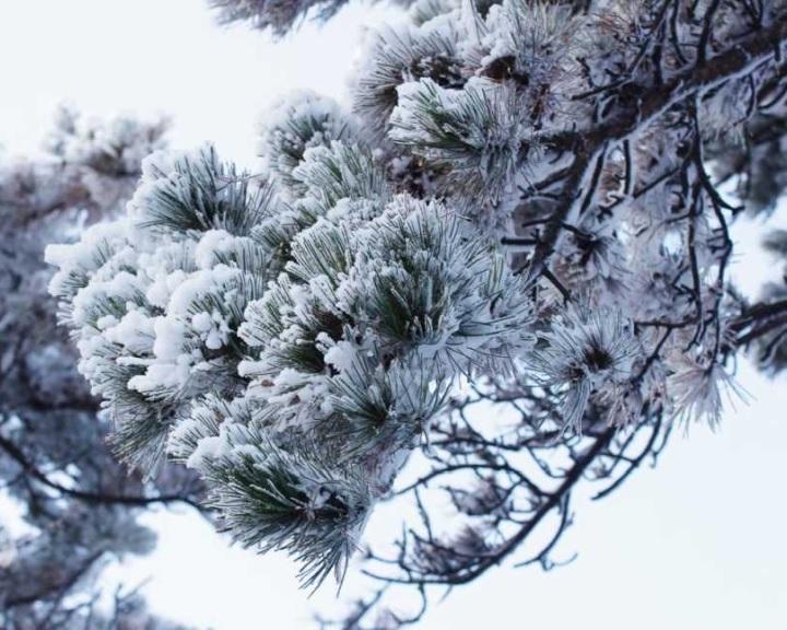 A havazás miatt balesetveszélyesek az erdei turistautak a Mecsekben