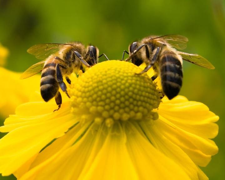 MTSZ: összegyűltek a magyarországi aláírások a méhek megmentését célzó európai kezdeményezéshez