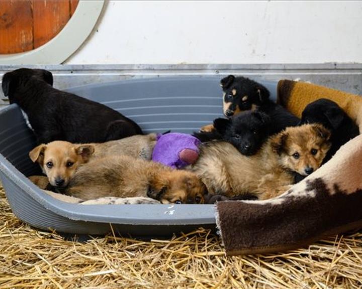 Felelős állattartást elősegítő ivartalanítási program indul