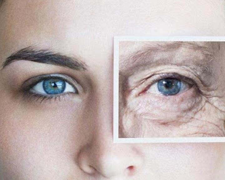 A nagy mocsári csigában keresik a megoldást az öregedés lassítására kutatók