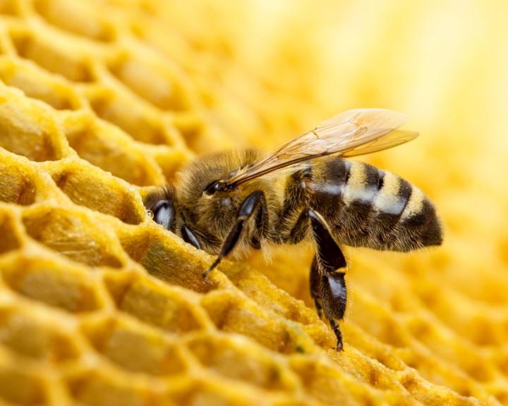 Agrármarketing Centrum: a méhektől függ az élelmiszerellátás jövője