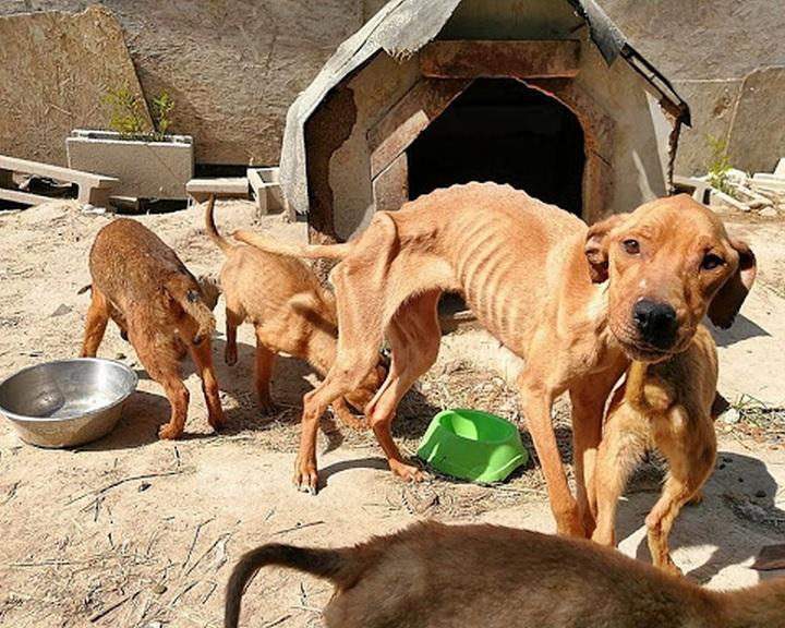 Online konzultáció indult az állatrendőrség felállításáról