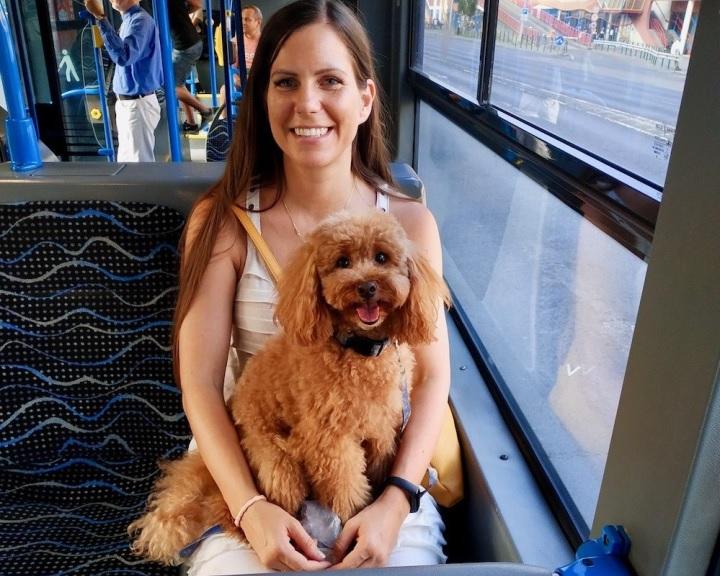 Júniustól váltható a pécsi buszokra a kutyabérlet